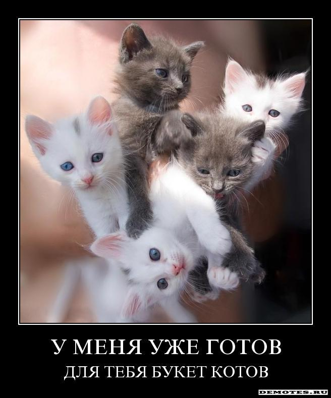 У меня всегда готов для тебя букет котов, большой букет белых роз