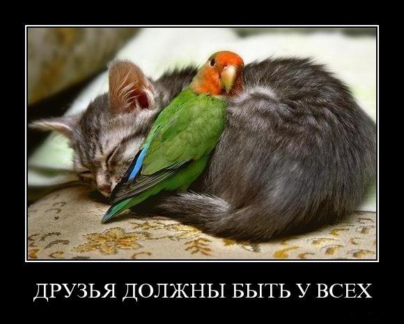 http://demotes.ru/uploads/posts/2010-10/1288073001_5c41xqpa69tk.jpg