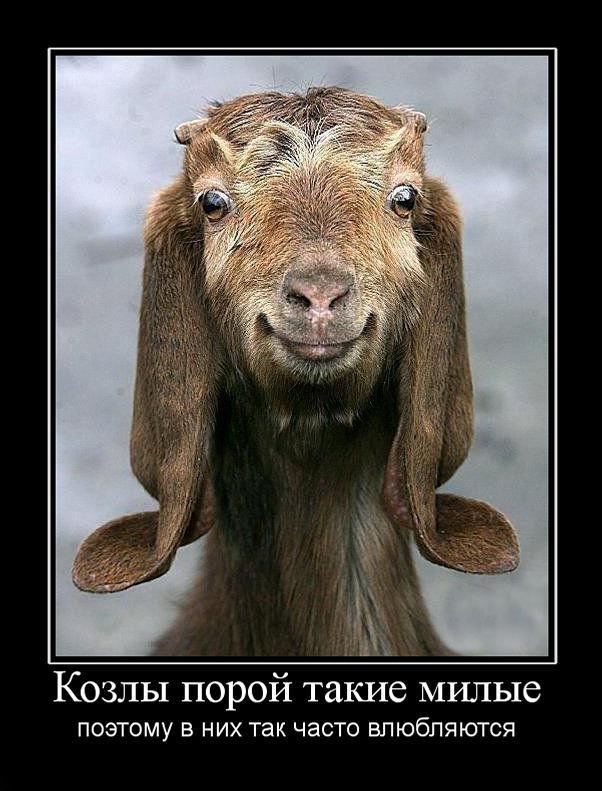http://demotes.ru/uploads/posts/2010-10/1288249231_kozlyi-poroj-takie-milyie.jpg