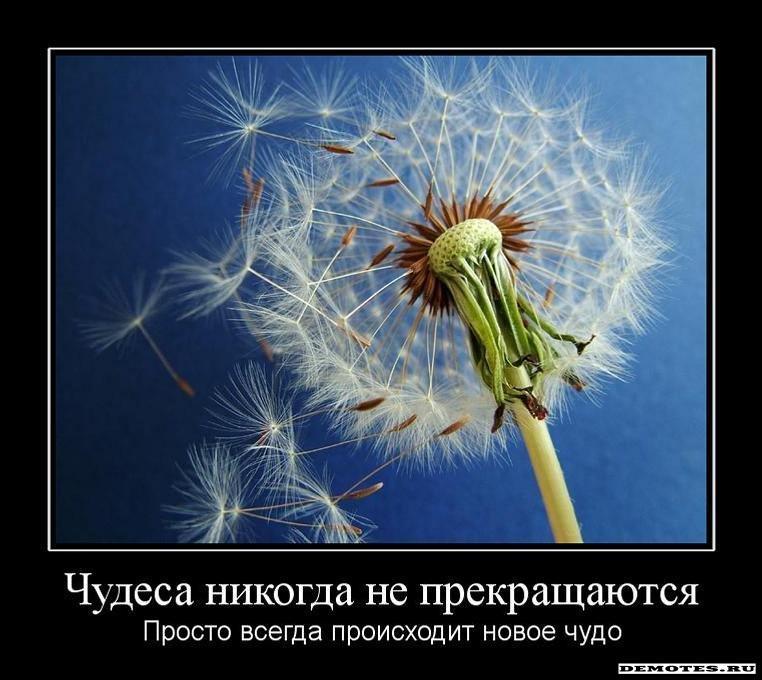 http://demotes.ru/uploads/posts/2011-02/1297692607_1chudesa-nikogda-ne-prekraschayutsya.jpeg