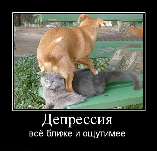 http://demotes.ru/uploads/posts/2011-04/1302158430_depressiya.jpg