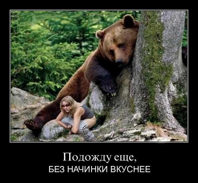 Котоматрица: нарушил правила я на мопеде: на шоу я спешил уральские медведи!