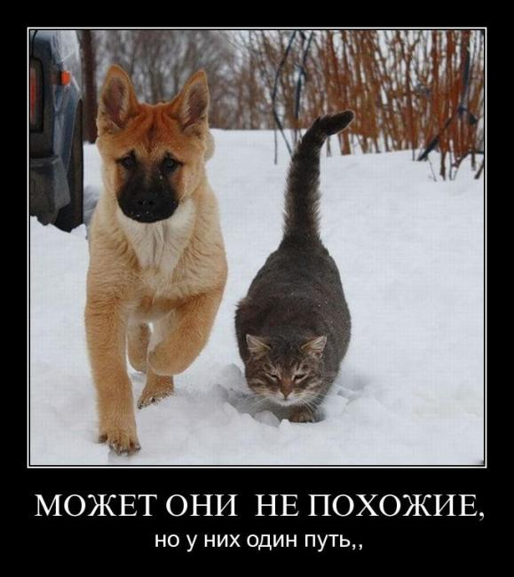 http://demotes.ru/uploads/posts/2011-04/thumbs/1302708847_h7m0i4eyezbl.jpg